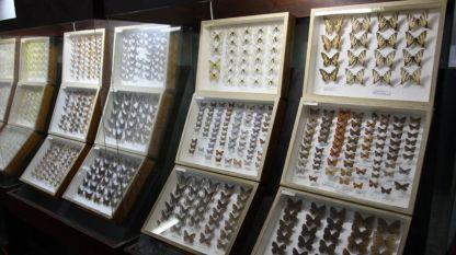 Природо-научният музей в троянското село Черни Осъм притежава една от най-богатите експозиции в България.