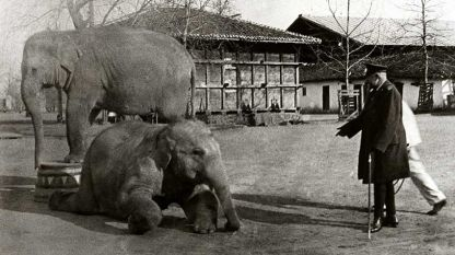 King Ferdinand feeds the first couple of elephants in Bulgaria, Nal and Damayanti, brought for Sofia Zoo. The photo is taken in the yard of Vrana Residence, early 20th century