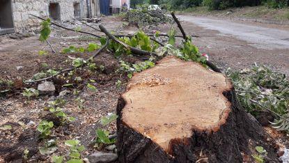 Сеч на дървета в Шумен