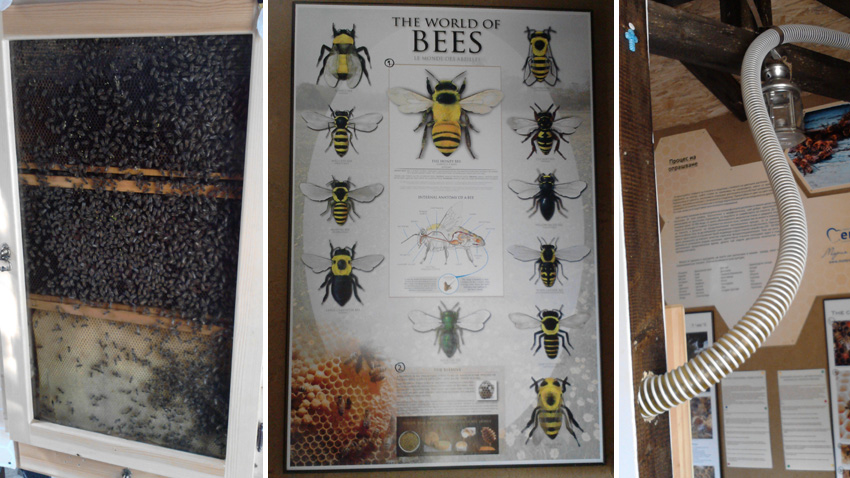 The Bee Museum in Sofia - showcasing biodiversity and