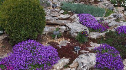 Ботанический сад в Балчике