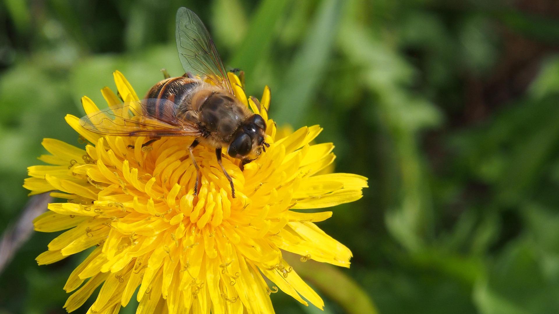 Финландски учени създадоха първата ваксина срещу заболяване при пчелите с