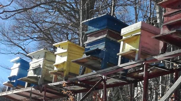 Топлото време е събудило пчелите в Осоговската планина, разказаха туристи,