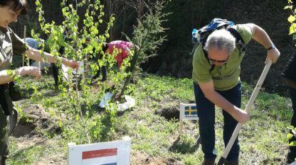Представителите на европейските държави засадиха 28 кедъра и брези на територията на Държавното горско стопанство