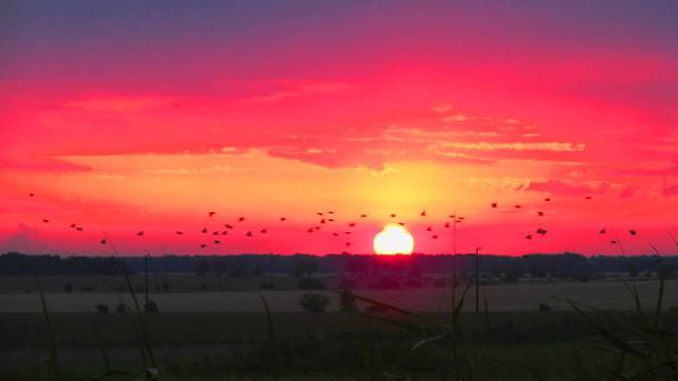 """С многобройните си планини, гори, защитени зони и биорезервати, населени от сладкопойни, екзотични, хищни и всякакви други видове птици, България е златна мина за """"колекционери"""" на пернати екземпляри."""