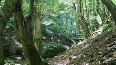 Централен Балкан гора планина дървета зеленина туристически пътеки