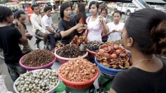 Индонезия насекоми буболечки