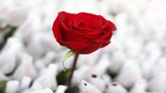 valentines_day_bta.jpg