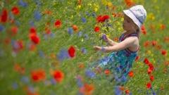Обичам пролетта, но и през лятото има хубави цветя