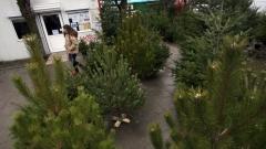 Коледните елхи могат да се използват за компост