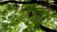 Изнасяме вековните си гори, които са основният ни туристически ресурс, дъб