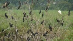 """В """"Рибарници Хаджи Димитрово"""" са установени 116 вида птици, от които 33 са включени в Червената книга"""