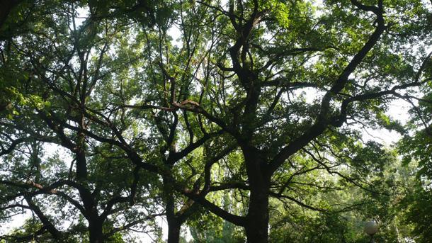 Слушатели на Хоризонт алармираха за опасни дървета на столичната улица