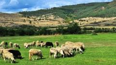 Pastorale Augenfreuden für die neugierigen Bulgarienreisenden