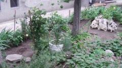 Ето как изглежда пространството около блока на един от софийските квартали.