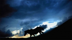 Народните вярвания отреждат на коня специално място, приписват му неземни качества, дават му космическа мощ.