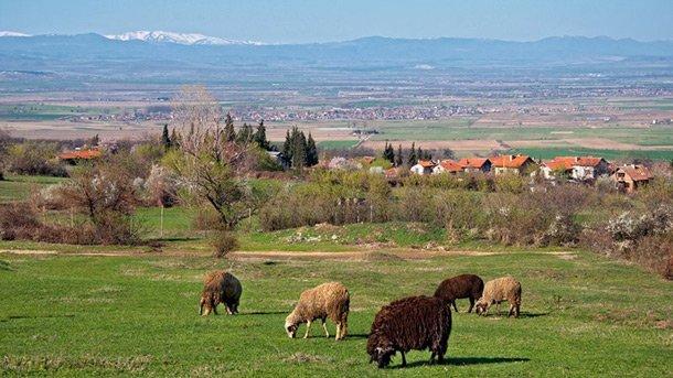 Животновъдството е един от основните видове поминък за жителите на Паталеница.