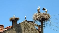 Щъркеловите гнезда върху електрически стълб са обичайна гледка у нас.