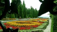 Në Kopshtin Botanik dhe në rezidencën verore të mbretëreshës rumune Maria llojet e bimëve numërojnë mbi 2500