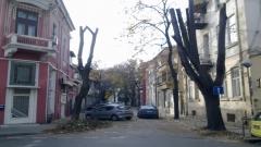 есенно рязане  на клоните на улица