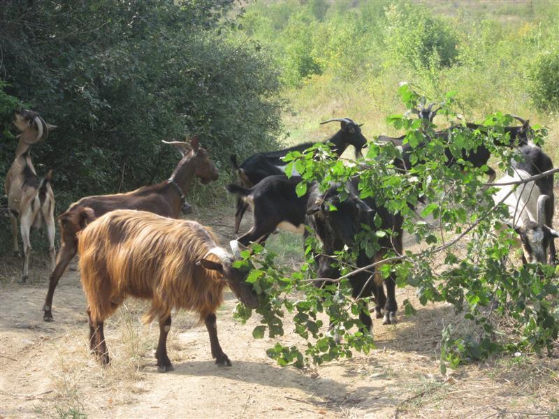 МВР отлага планираната евтаназия на животни, която трябваше да започне