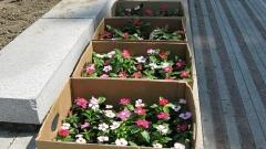 видин цветя заетост озеленяване алеи